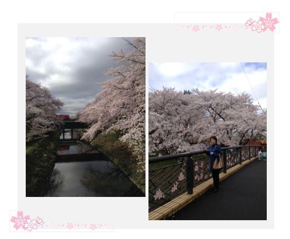 sakura_seito_gifu.JPG