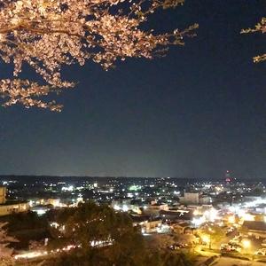 桜1.jpeg
