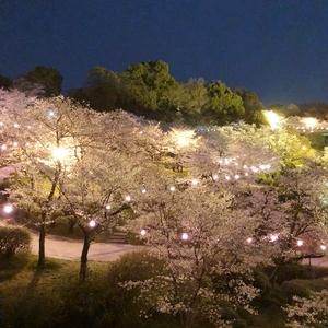 桜3.jpegのサムネイル画像